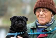 Лучшие породы собак для пожилых людей