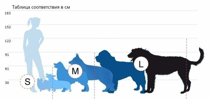 Какой размер считается средним?