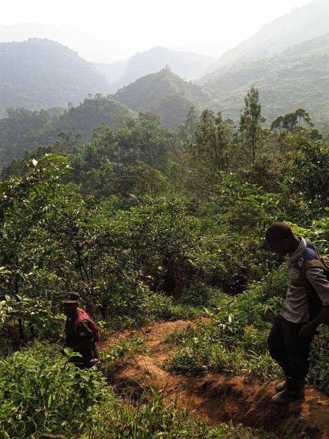 Gorillatracking Bwindi-Nationalpark Uganda