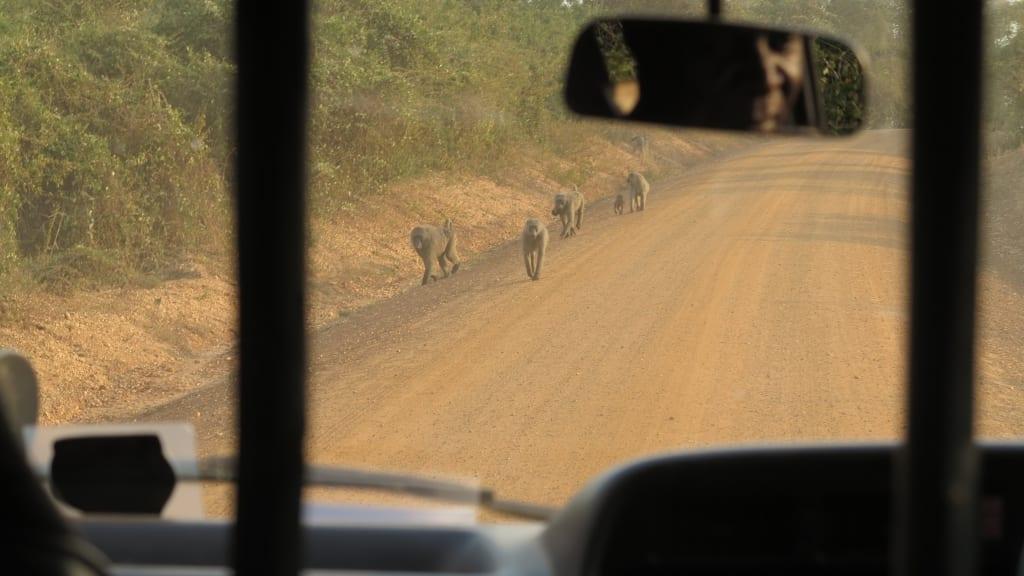Straße in Uganda mit Affen