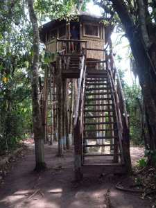 Baumhaus der Kibale Primate Lodge im Kibale-Nationalpark in Uganda
