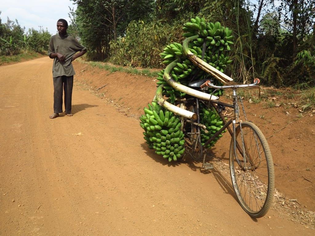 Fahrrad mit Bananenstaude