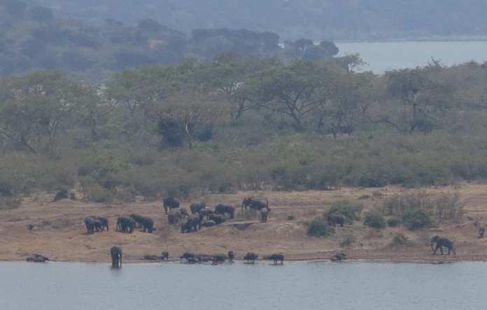 Ellefanten im Queen Elizabeth National Park in Uganda