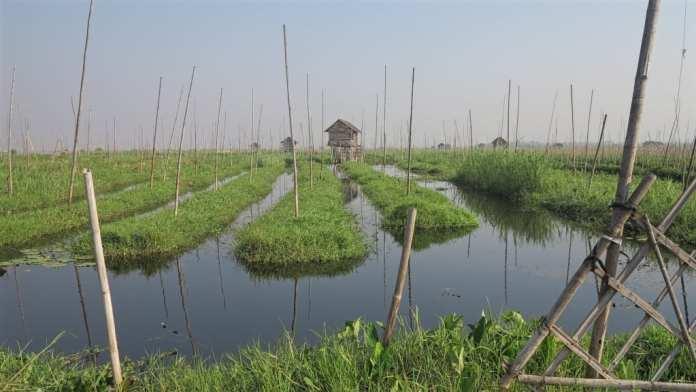 Schwimmende Tomatenbeete auf dem Inle-See in Myanmar