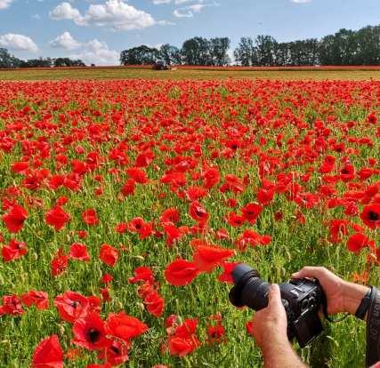 Jemand fotografiert ein rot blühendes Mohnfeld