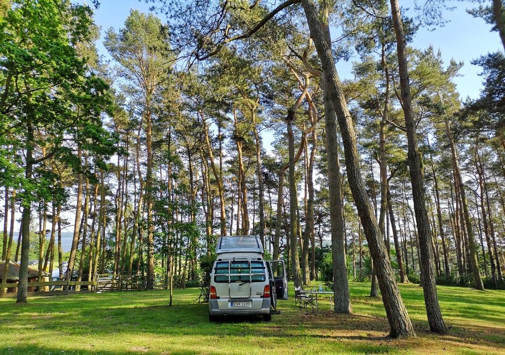 Campingmobil auf einem leeren Campingplatz im Kiefernwald
