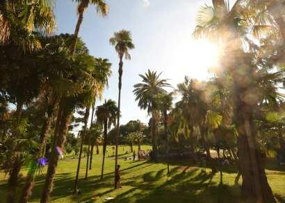 Park mit Palmen