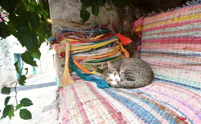 Katze schläft auf Flickerteppich
