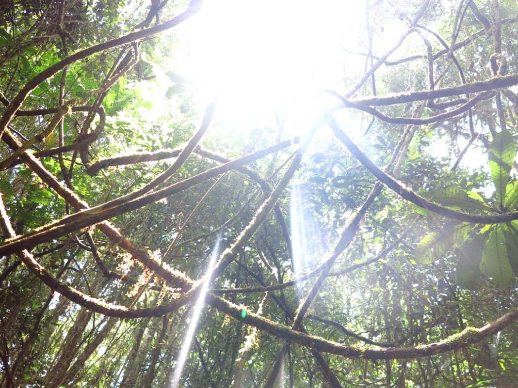 Blick ins Blätterdach eines Waldes