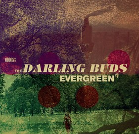The Darling Buds Evergeen.jpg