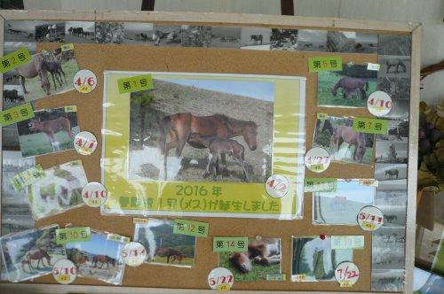 都井岬の仔馬
