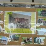 今年生まれた仔馬の話が聞ける。都井岬ビジターセンター野生馬ガイドのお話し。