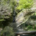 紅葉で有名な秩父華厳の滝は、隠れた桜の見どころスポットでした。