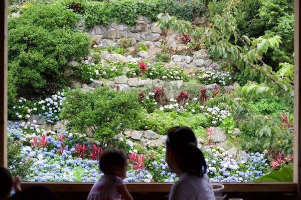 よへな紫陽花園