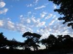 綺麗な空だ。