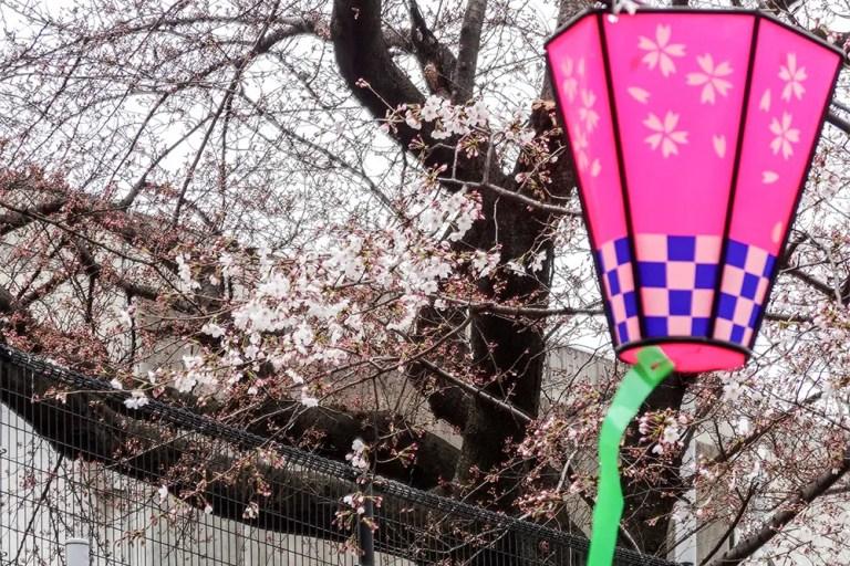 柴島浄水場sakura