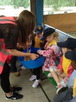 Reception visit Godstone Farm - June 2015[3]