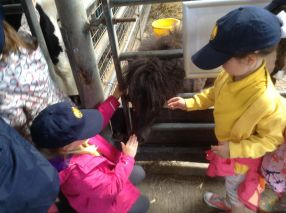 Reception visit Godstone Farm - June 2015[7]