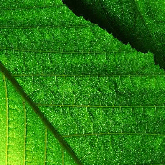 photo d'une plante verte prise avec l'iphone x