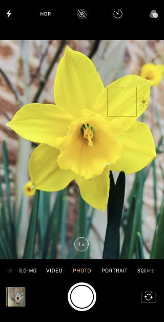 photo fleur pour iphone x