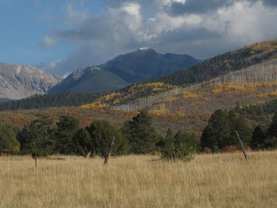 Golden Aspens near Truchas, NM