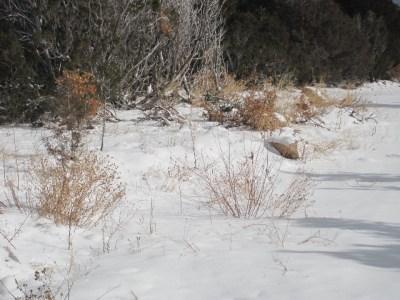 Truchas Snow