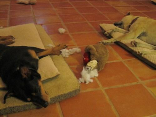 skye & rescue dog finn