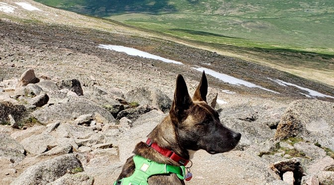 Dogs at Altitude