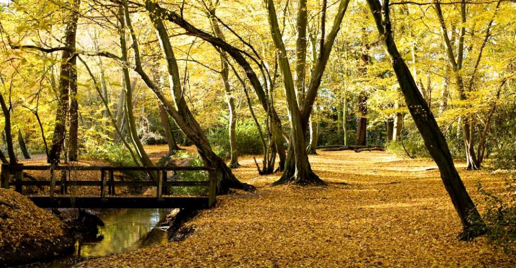 With an average price of $363,876, the combined market value of natural forestland for sale in ohio is $31 million. Epping Forest Highams Park Portal