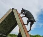 leo-climbing-doberman