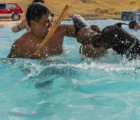 leo-doberman-in-pool