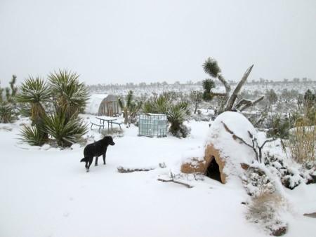 1-31-14-snow-hoophouse