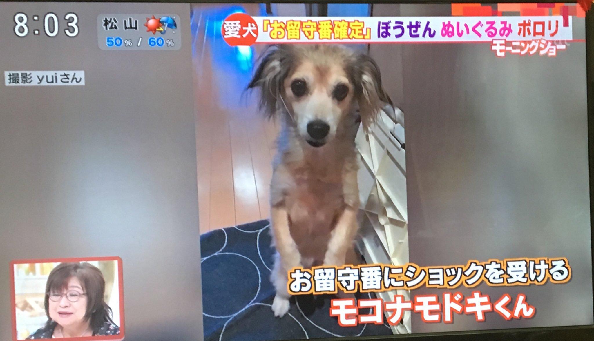 モコナモドキ モーニングショー 犬