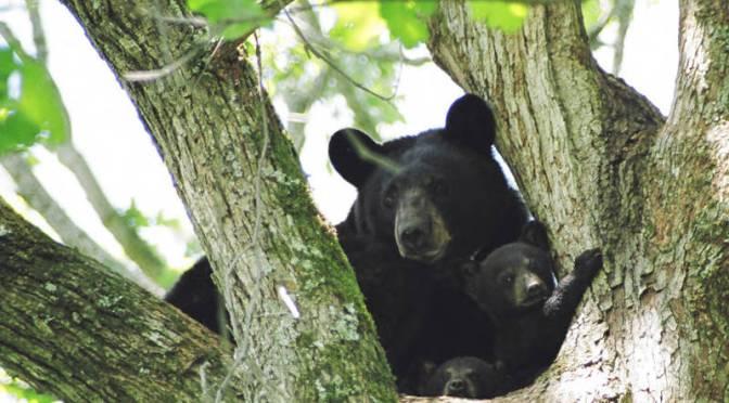 Florida New Year's Bear Serves As Reminder