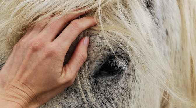 Horse Killings: Is There a Pattern In TX Cases?