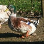 duck twin and children friendly family holidays cornwall