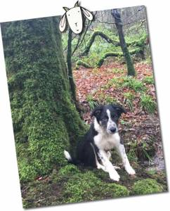 dog in the woods at higher lank farm twin friendly holidays cornwall