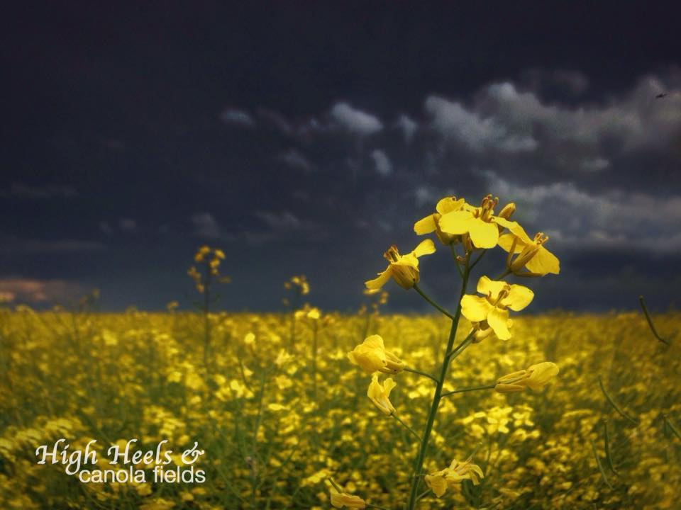 Canola Fields Quotes: There Are Only Some Things You Can Learn In A Storm