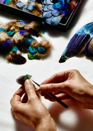 Selecting peacock feathers according to their various pigments; removing a peacock feather barb, individually used in the composition.