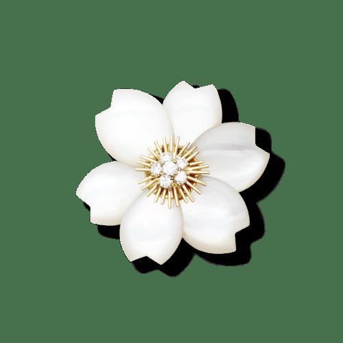 Rose de Noël clip
