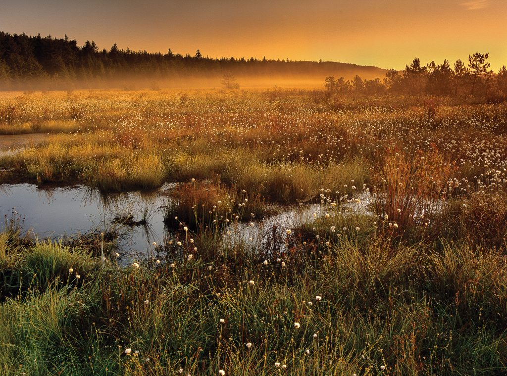 Monongahela National Forest: Dolly Sods Wilderness