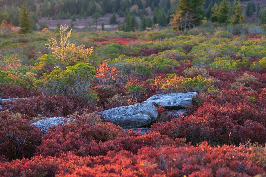 Bear Rocks National Natural Landmark
