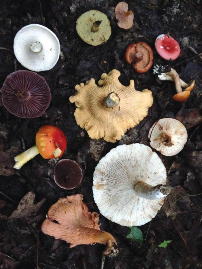 WV Mushrooms