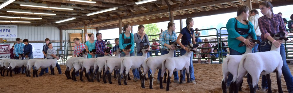 Highland County, Virginia, Highland County Fair, livestock show, youth, agriculture, learn, learning, kids, children, teens, sheep, livestock show