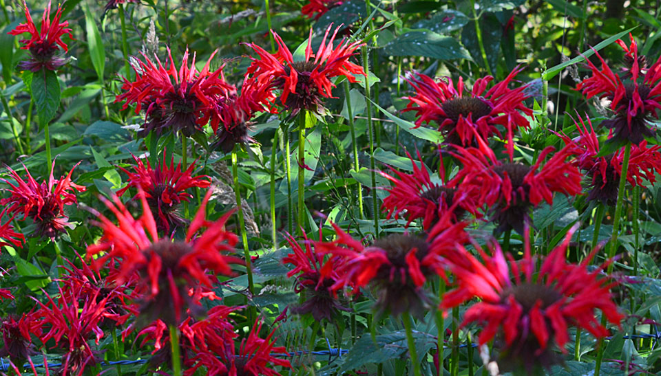 Highland County, Virginia, wildflowers, explore, tourism, travel, nature