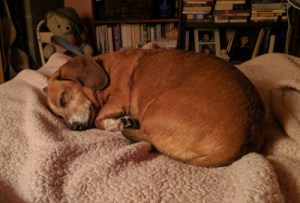 Alex, Highland County, Virginia, Monterey, dog, dogs, love, family, man's best friend