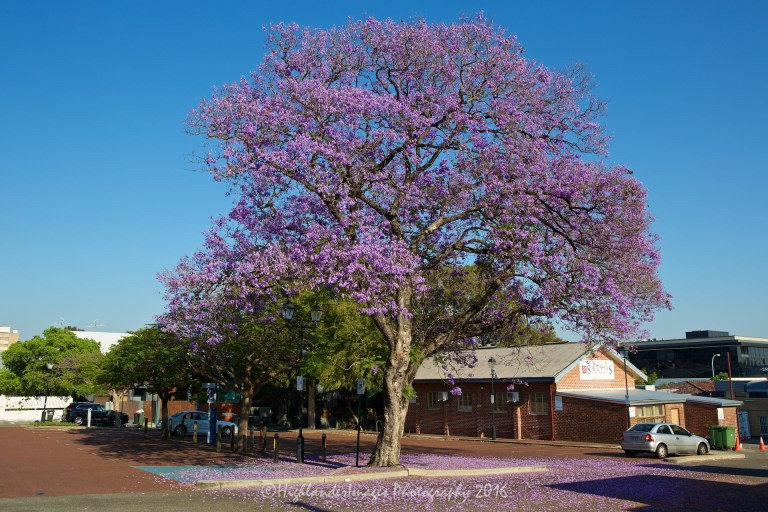 Subiaco, Perth, Western Australia