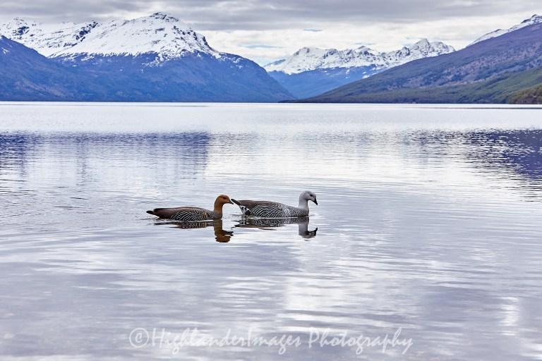 Tierra del Fuego National Park, Ushuaia, Argentina