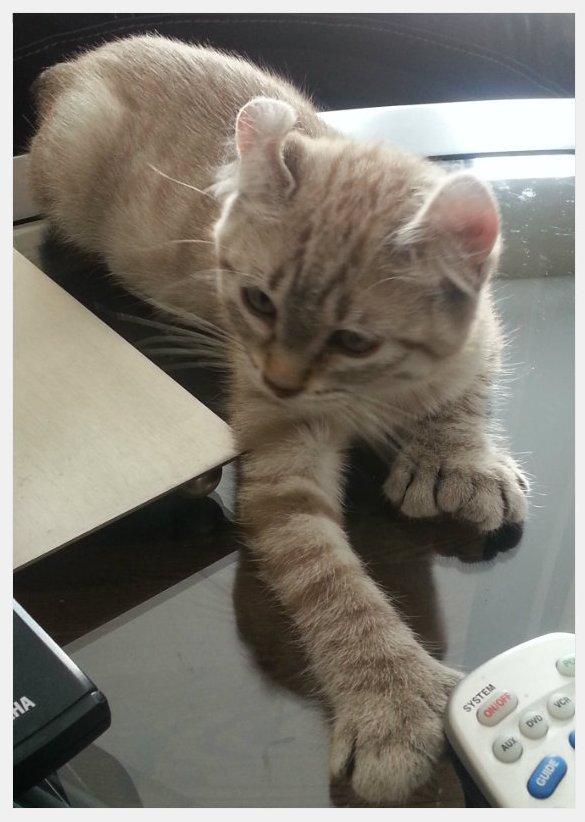 phibie chaton el et spita 11 juin 6
