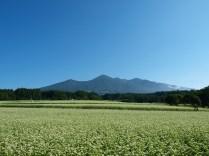 快晴の蕎麦畑4